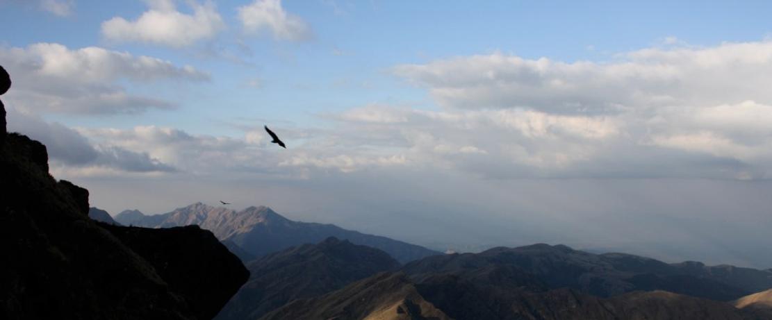 Condors on Mt. Creston, Condor Valley