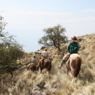 "In Search of the North Andean Deer (""La Taruka"") at Condor Valley"